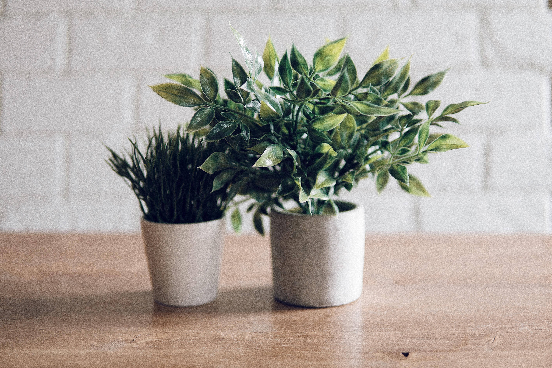 Como cuidar das plantas de casa no inverno