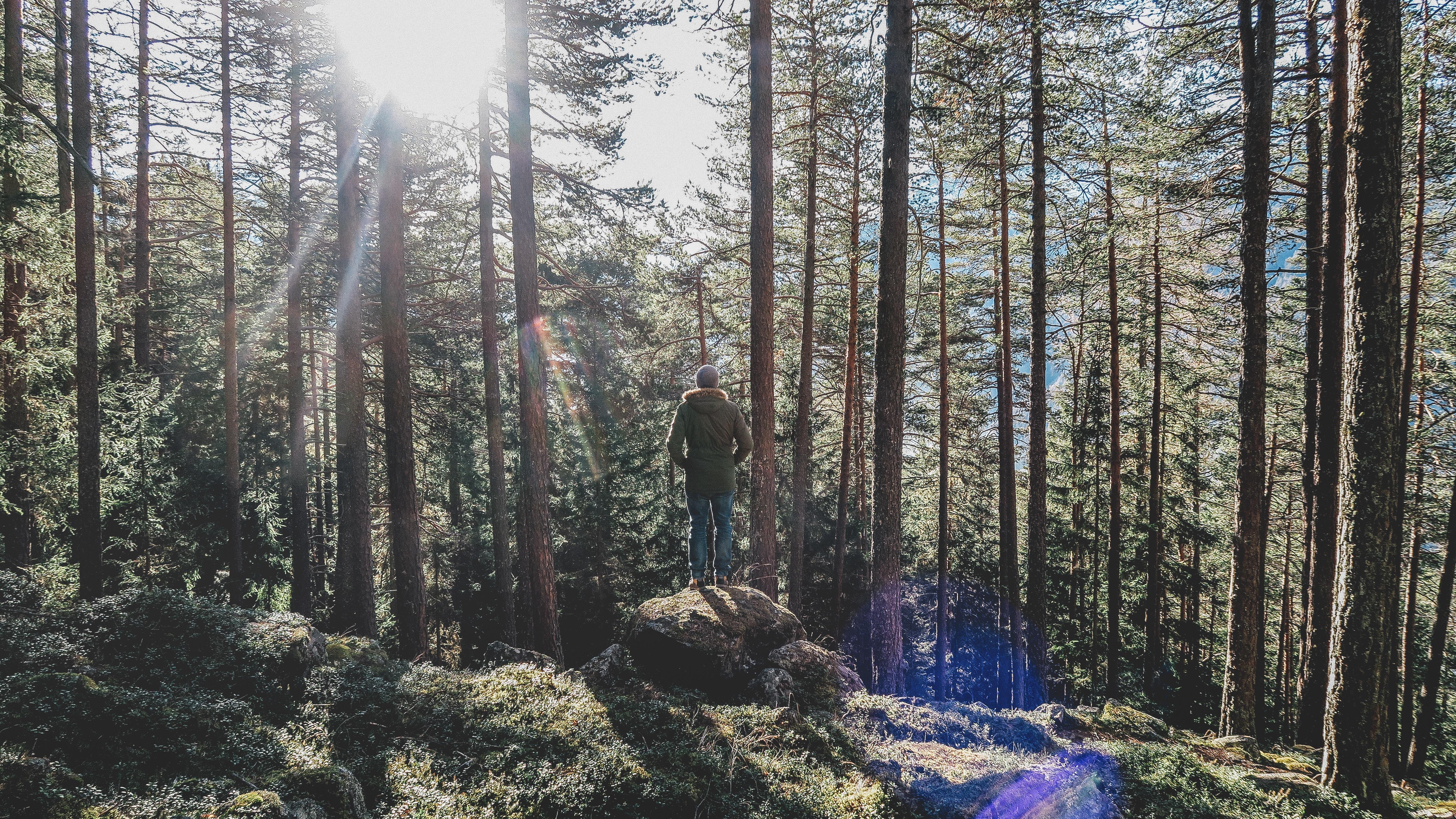 Quatro formas de ajudar o meio ambiente sem sair de casa