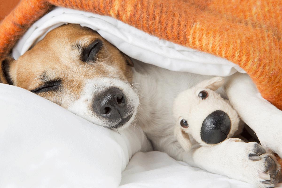 Dormir melhor de noite: saiba como com essas 5 dicas