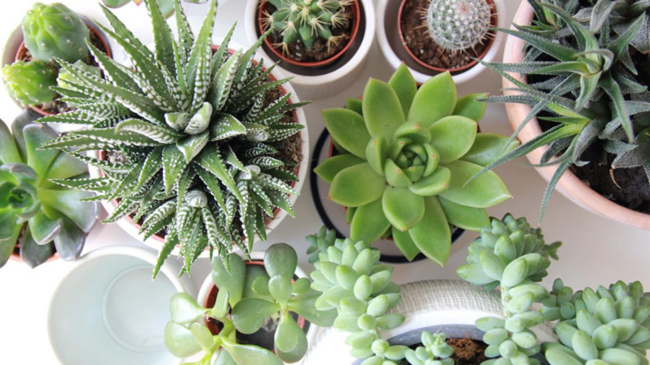 Plantas para ter em casa: confira quais as melhores!