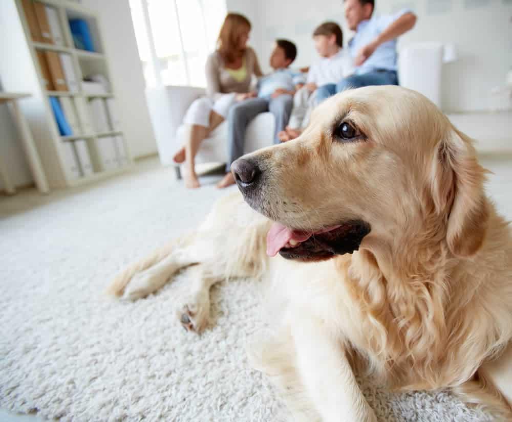 Dicas para ter cachorro em apartamento