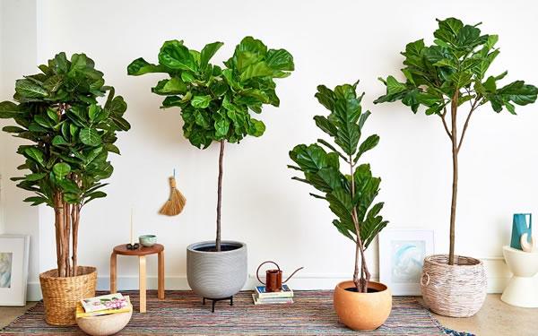 Plantas artificiais para casa: aprenda como decorar!